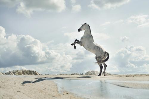 Wall mural horse, beach, sand, water, clouds