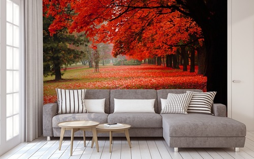 Wall mural spatial autumn park, red leaves, autumn trees, decoration