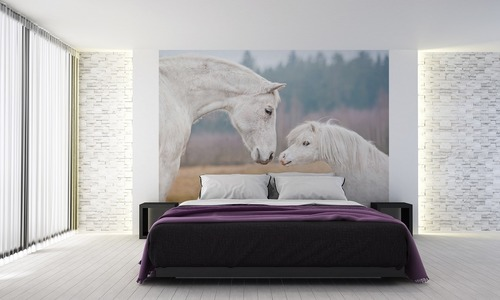 Wall mural horses, Shetland pony, white horse, wall wallpaper