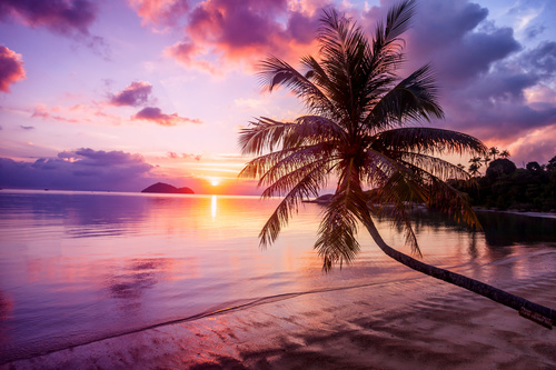 Wall mural beach, sunset, palm tree, shades of purple, orange and blue