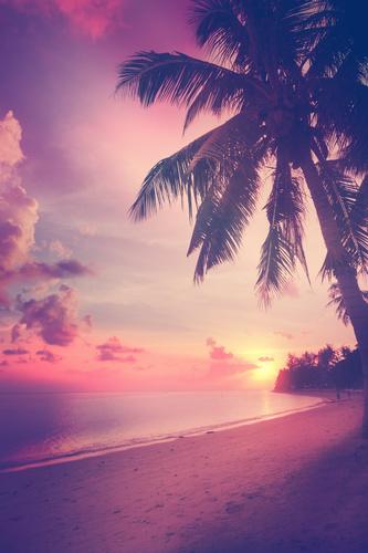 Wall mural 3D sunset on the beach, coconut palm, sea