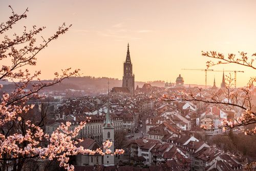 Wall mural sunset, Bern, flowering cherry, Bern Cathedral, old town